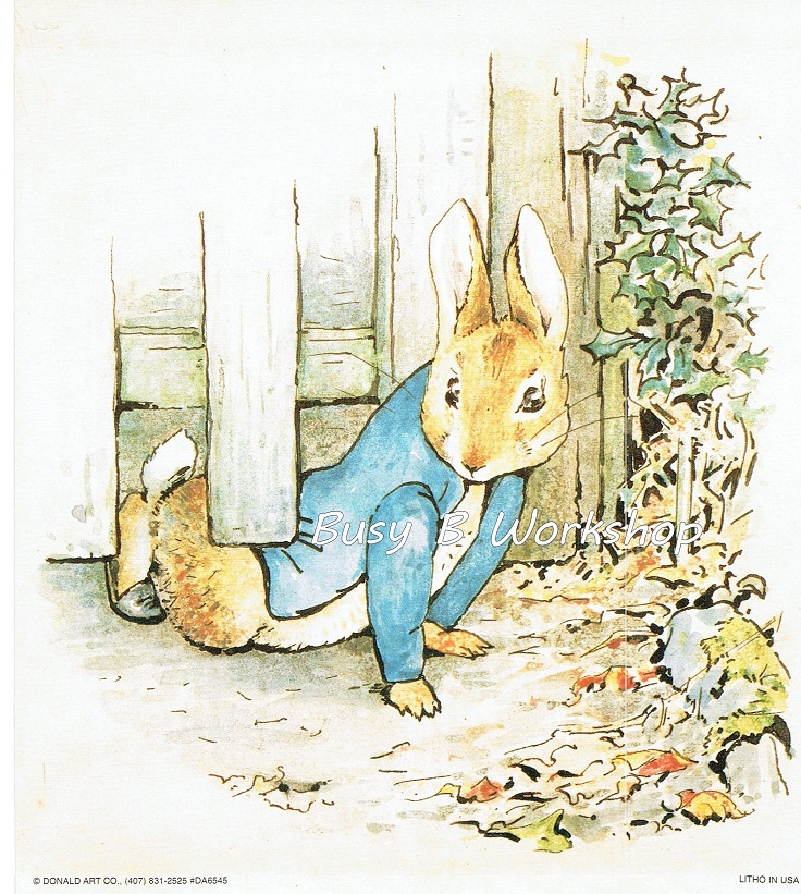 Peter Rabbit Stuck Under The Fence